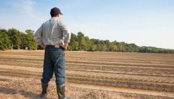 DAERA Launch Collaborative Agri-Research Funding Programme